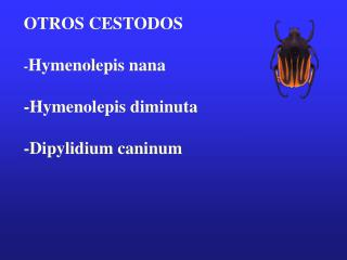 OTROS CESTODOS  -Hymenolepis nana  -Hymenolepis diminuta  -Dipylidium caninum