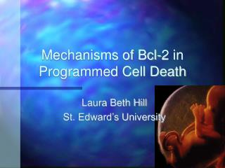 Mechanisms of Bcl-2 in Programmed Cell Death