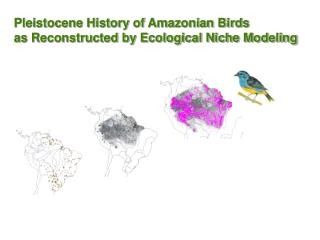 Pleistocene History of Amazonian Birds  as Reconstructed by Ecological Niche Modeling