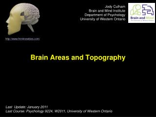 Brain Areas and Topography