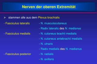 Nerven der oberen Extremit t