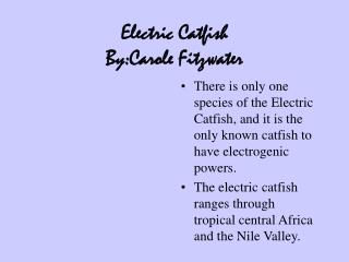 Electric Catfish By:Carole Fitzwater