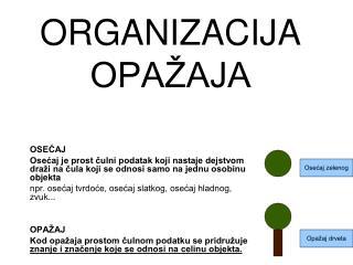 ORGANIZACIJA OPA AJA