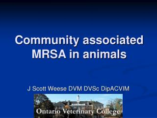 Community associated MRSA in animals