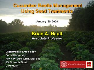 Cucumber Beetle Management Using Seed Treatments