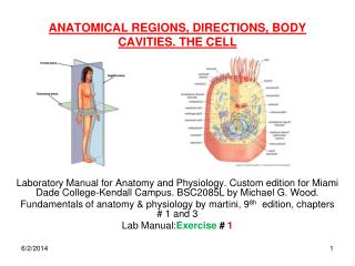 ANATOMICAL REGIONS, DIRECTIONS, BODY CAVITIES. THE CELL
