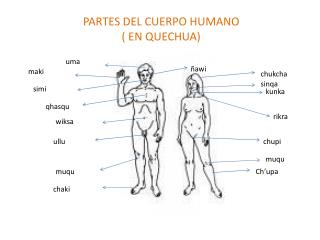 PARTES DEL CUERPO HUMANO  EN QUECHUA