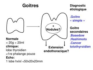 Normale  20g  20ml clinique:  lobe thyroidien 1re phalange pouce Echo: 1 lobe hxlxl 50x20x20mm