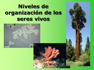 Niveles de organizaci n de los seres vivos