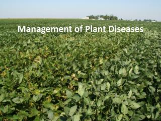 Management of Plant Diseases