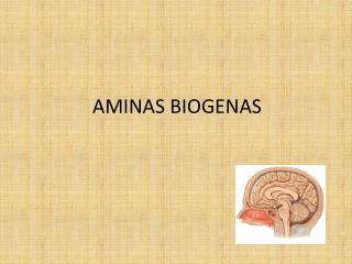 AMINAS BIOGENAS