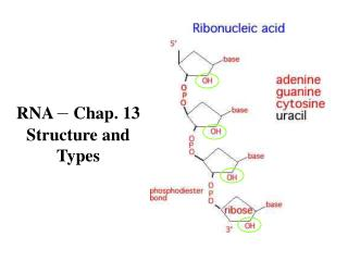 RNA   Chap. 13 Structure and Types