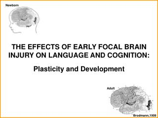 THE EFFECTS OF EARLY FOCAL BRAIN INJURY ON LANGUAGE AND COGNITION:  Plasticity and Development