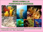 REINO ANIMALLIA POR FEROS E CNID RIOS