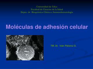 TM. Dr.  Iv n Palomo G.
