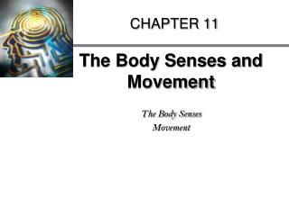The Body Senses and Movement  The Body Senses Movement