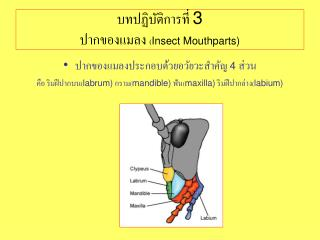 3  Insect Mouthparts