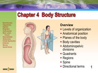 Chapter 4  Body Structure