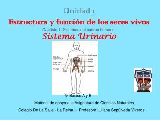 Unidad 1 Estructura y funci n de los seres vivos Cap tulo 1: Sistemas del cuerpo humano.  Sistema Urinario