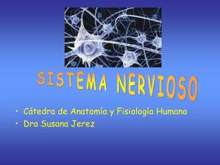 C tedra de Anatom a y Fisiolog a Humana Dra Susana Jerez