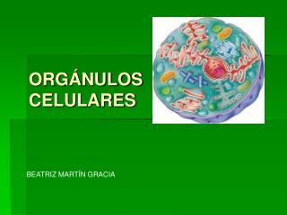 ORG NULOS  CELULARES