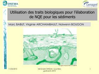 Utilisation des traits biologiques pour l  laboration de NQE pour les s diments
