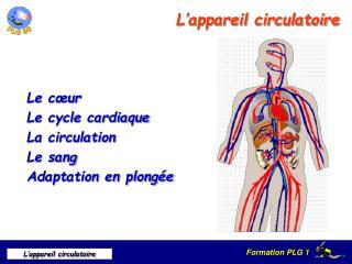 L appareil circulatoire