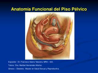 Anatom a Funcional del Piso P lvico