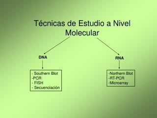 T cnicas de Estudio a Nivel Molecular