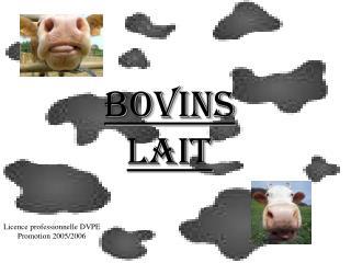 Bovins Lait