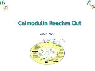 Calmodulin Reaches Out