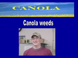 Common Weeds of Canola