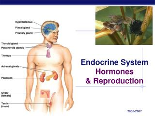 Endocrine System Hormones  Reproduction