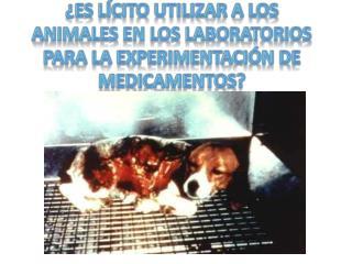 Es l cito utilizar a los animales en los laboratorios para la experimentaci n de medicamentos