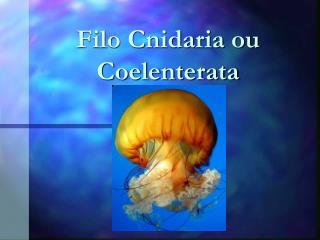 Filo Cnidaria ou Coelenterata