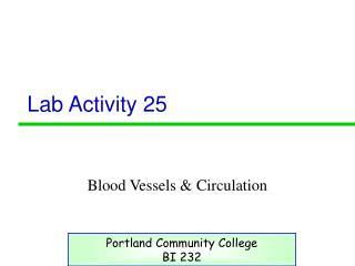 Lab Activity 25