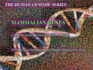 MAMMALIAN GENES