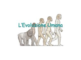 L Evoluzione Umana