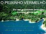 O PEIXINHO VERMELHO