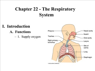Chapter 22 - The Respiratory System