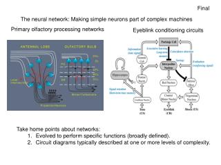 The neural network: Making simple neurons part of complex machines