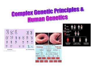 Complex Genetic Principles  Human Genetics