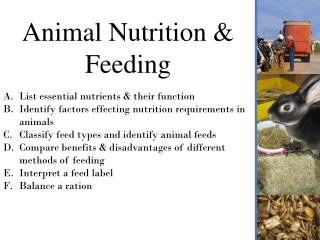 Animal Food  Nutrition
