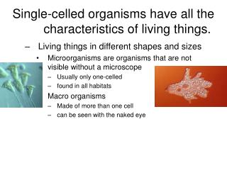 Single-celled organisms have all the characteristics of living things.