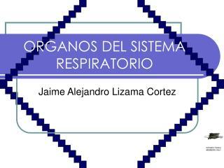 ORGANOS DEL SISTEMA RESPIRATORIO