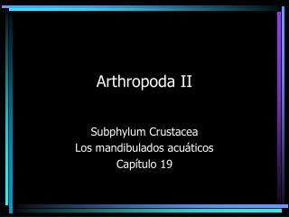 Arthropoda II