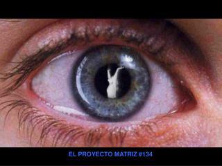 EL PROYECTO MATRIZ 134
