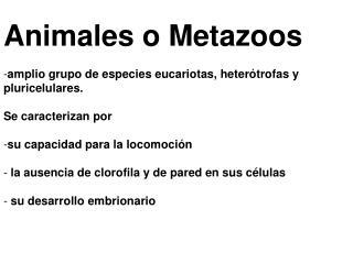 Animales o Metazoos  amplio grupo de especies eucariotas, heter trofas y pluricelulares.   Se caracterizan por   su capa