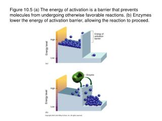Figure 10.5 a The energy of activation is a barrier that prevents molecules from undergoing otherwise favorable reaction