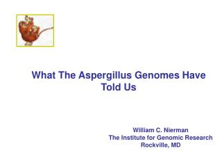 What The Aspergillus Genomes Have Told Us